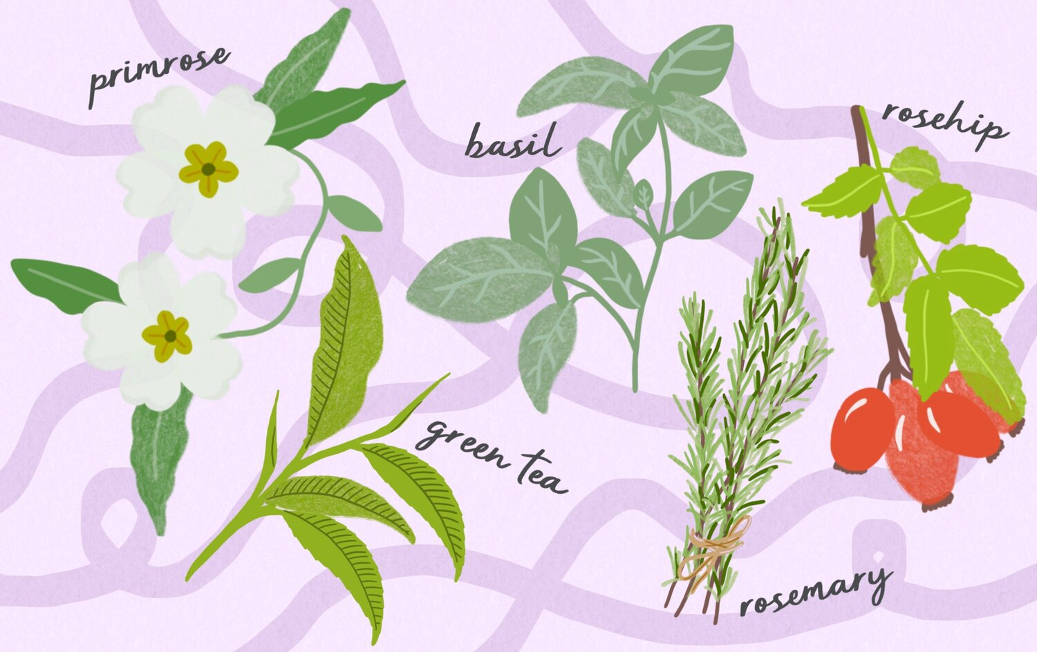 Top 8 Affordable Malaysian  Superfoods for Beauty